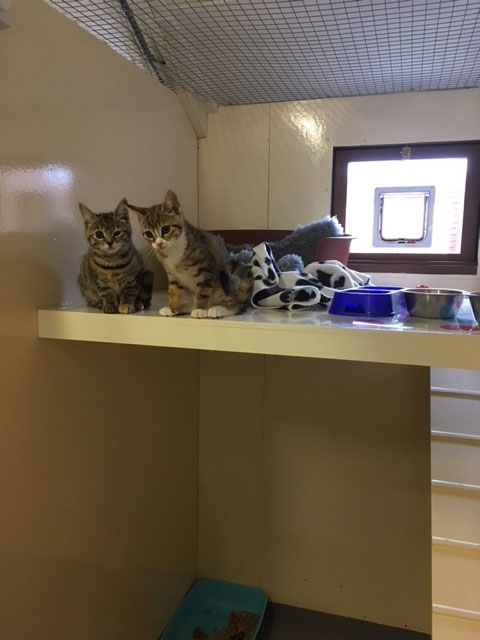 Whinfield Cattery